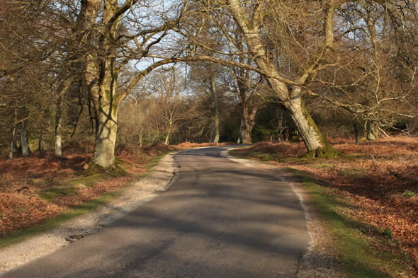 Cycle Ride in the New Forest