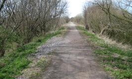 The Phoenix Trail