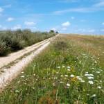 Cycling the Ridgeway Trail … again